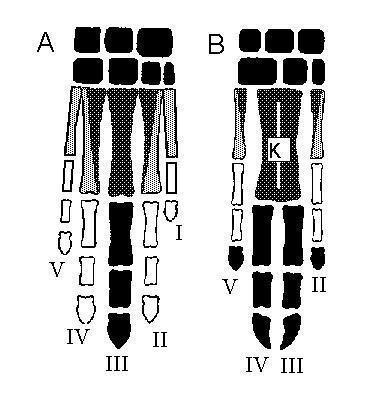 sedde - (Schule, Biologie, Kamel)