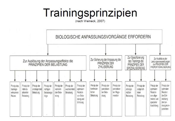 verschiedene Prinzipien des Trainings - (Training, Trainingsplan)