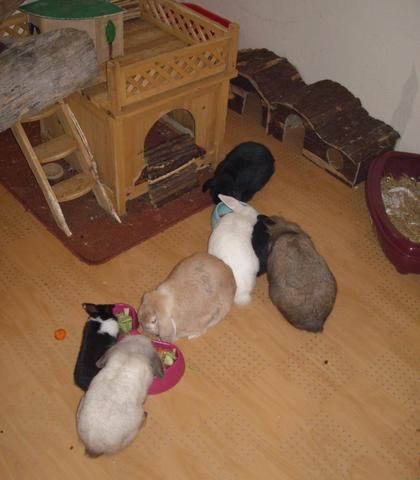 Meine - (Freigehege, Kaninchen und Katzentür)