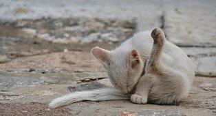 Sauber! - (Liebe, Familie, Katze)