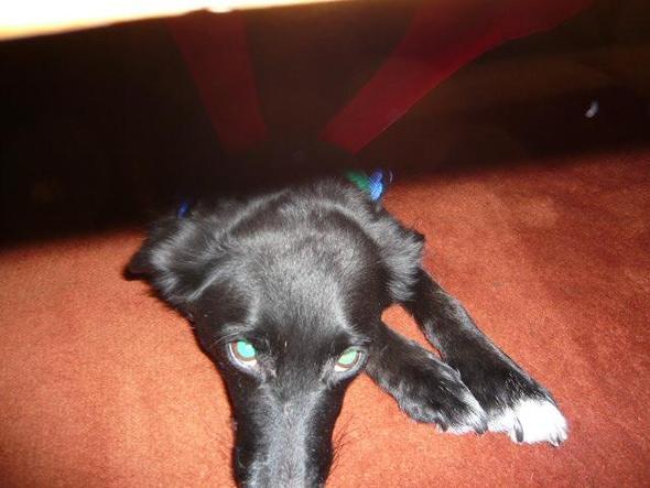 mein spanischer hund - (Hund, Spanien)