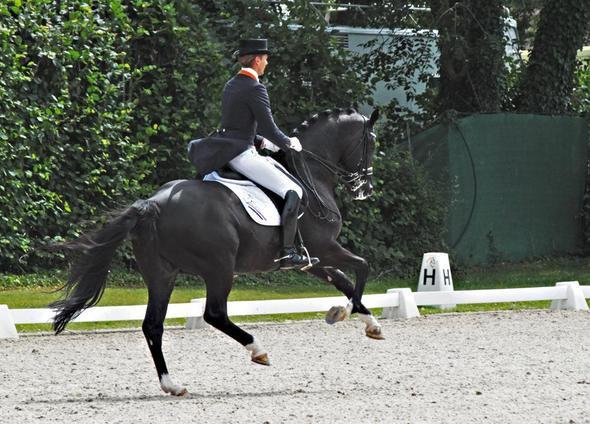 Hier extremes Beispiel. Pferd deutlich unterm Schwerpunkt. Vorhand weitausholend - (Pferde, galopp)