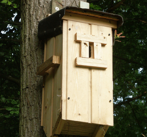 Nistkasten - (Tiere, Insekten, Bienen)