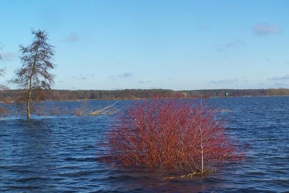 Roter Hartriegel - (Garten, Baum, Gärtner)