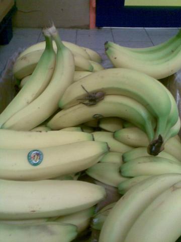 Bananenspinne 1 - (Tod, Supermarkt, Spinnen)