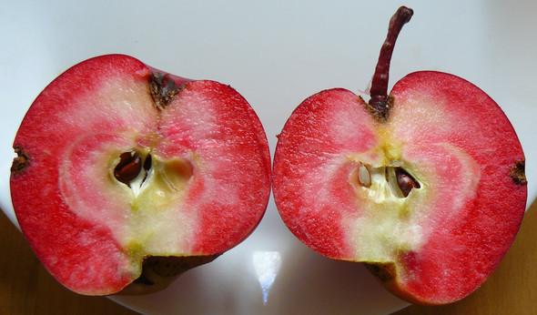 rotfleischiger Apfel, Sorte unbekannt - (Tiere, Ernährung, Gesundheit und Medizin)