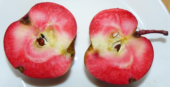 der selbe Apfel, mit Blitz fotografiert - (Tiere, Ernährung, Gesundheit und Medizin)