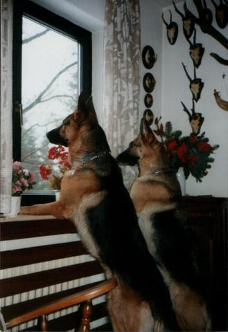 Yenda und Yuri - (Hund, Verhalten, Hundeerziehung)