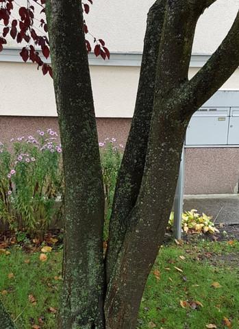 stamm1 - (Baum, Wald, Buche)