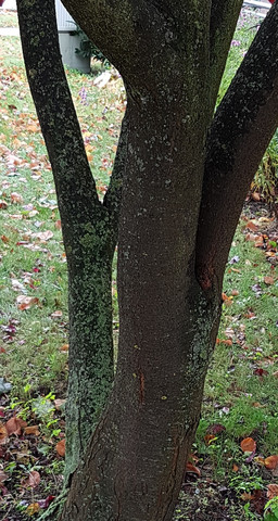 stamm2 - (Baum, Wald, Buche)
