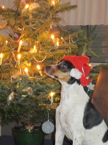 13 kg - (Weihnachten, Silvester)