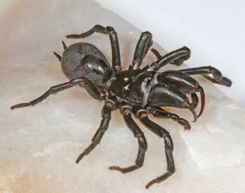 a3 - (Tiere, Spinnen)