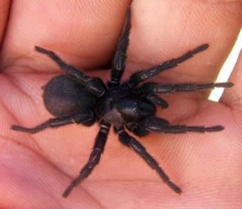 a4 - (Tiere, Spinnen)