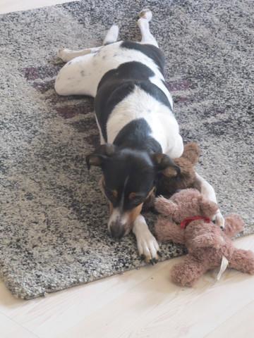 13 kg - (Tiere, Hund, Geschäft)