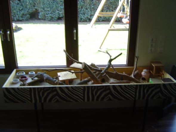 wie kann ich mir eine m useburg selber bauen tiere maus auslauf. Black Bedroom Furniture Sets. Home Design Ideas