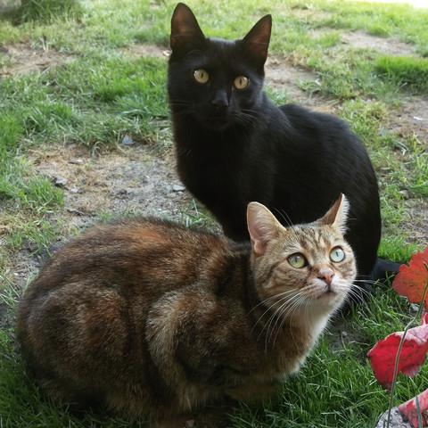 :) - (Tiere, Katze, Katzen)