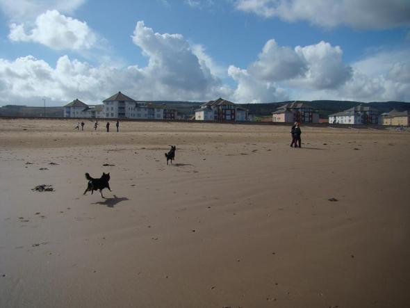 fliegende hunde - (Hund, Foto, Fotografie)