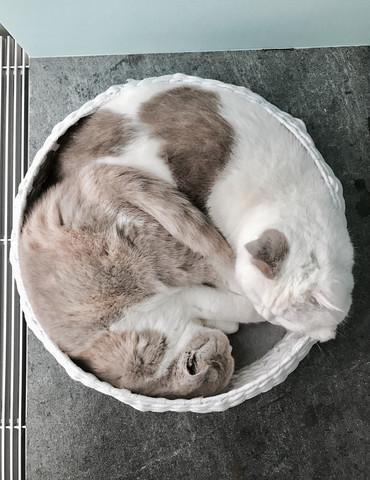 - (Tiere, Katze, Haustiere)