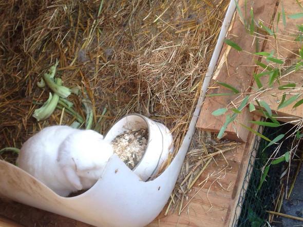 Kaninchen Wanne gegen Urin auf Holz - (Tiere, Kaninchen, Stall)