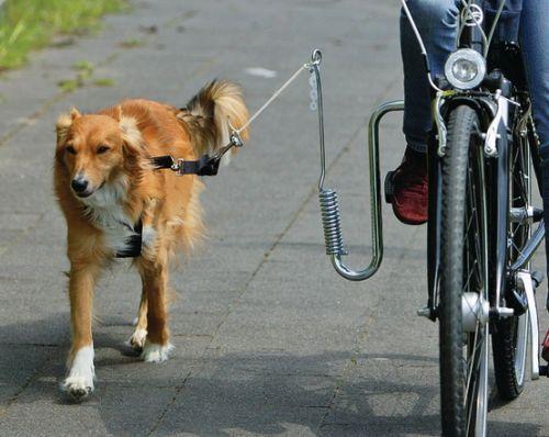Fahrradhalter für Hunde - (Sport, Tiere, Mit Hund Fahrradfahren)