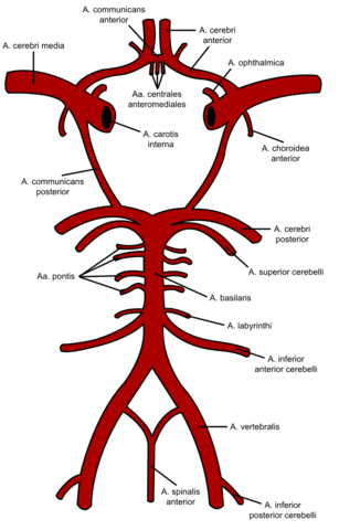 - (Medizin, Körper, Biologie)