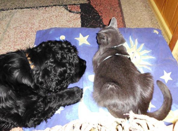 2 freunde  - (Katze, Futter)