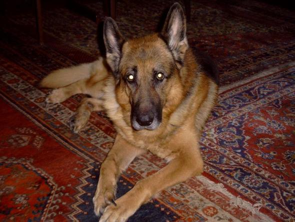 Hund Gassi gehen - (Tiere, Hund, Job)