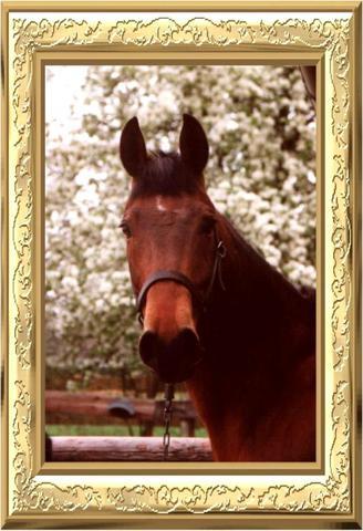 Pferdekauf - (Pferde, Haltung)