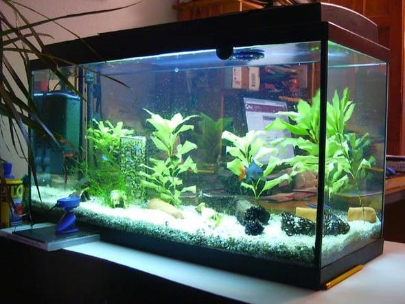 Aquarium Als Terrarium Verwenden : Aquarium terrarium unterschied