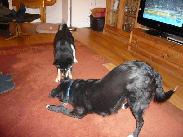 2 freunde - (Hund, Tierheim, Zweithund)