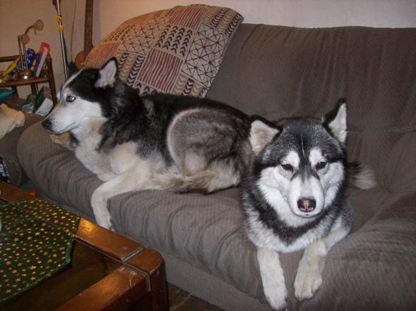 meine zwei :-) - (Hund, Tierheim, Zweithund)