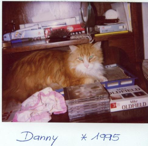 Dannyboy in jungen Jahren - (Katzen, Futter)
