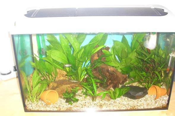 aquarium f r skalar goldfisch oder guppys tiere fische aquaristik. Black Bedroom Furniture Sets. Home Design Ideas