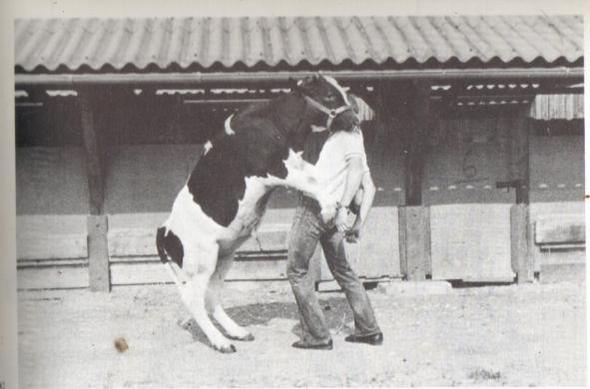 Quelle: Sambraus, Nutztierethologie - (Tiere, verliebt)