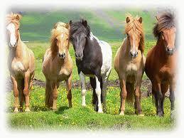 Pferde 1 - (Medikamente, Vorrat)