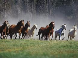 Pferde 3 - (Medikamente, Vorrat)