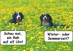 - (Politik, Abstimmung, Sommerzeit)