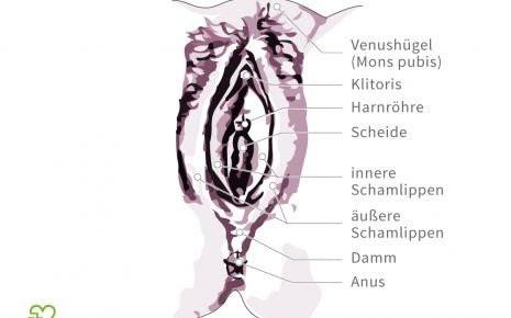 Wo ist der Kitzler an der Vagina? (Liebe, Sex)
