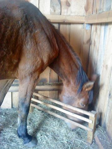 beschlagnahmtes pferd kaufen pferde reiten pony. Black Bedroom Furniture Sets. Home Design Ideas