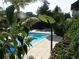 - (Garten, Sommer, Pool)