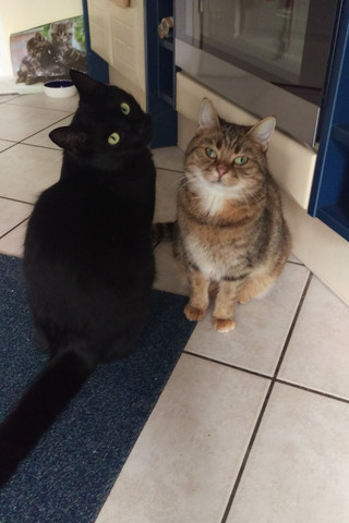 Katzen Rudeltiere