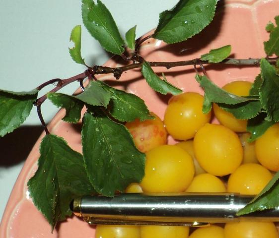 welche frucht ist das gelbe kirschgro e frucht haut glatt innen ein kern alles hnlich. Black Bedroom Furniture Sets. Home Design Ideas