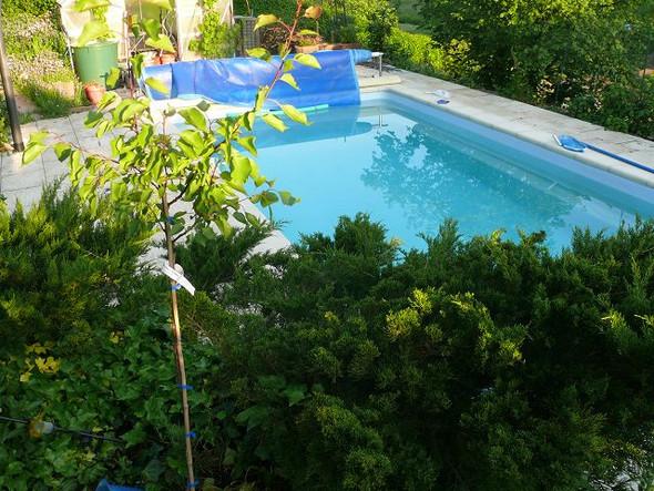 Pool im Garten selber bauen?