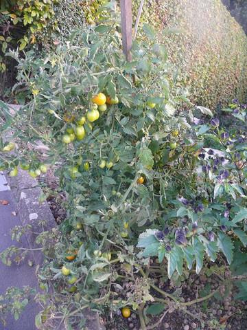 - (Garten, Pflanzen, Natur)