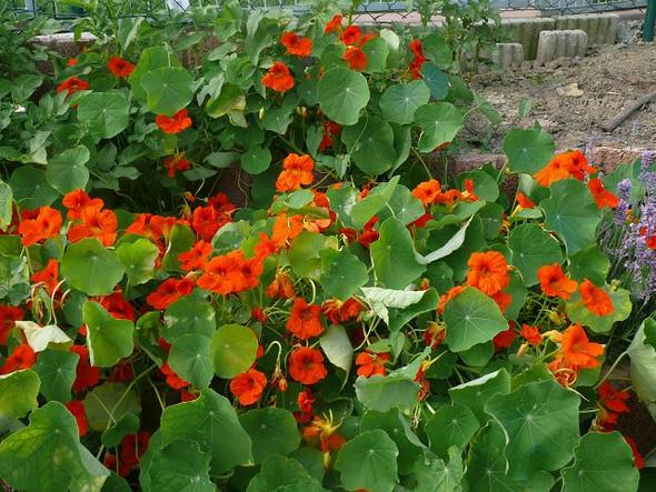 - (Garten, Pflanzen, Blumen)