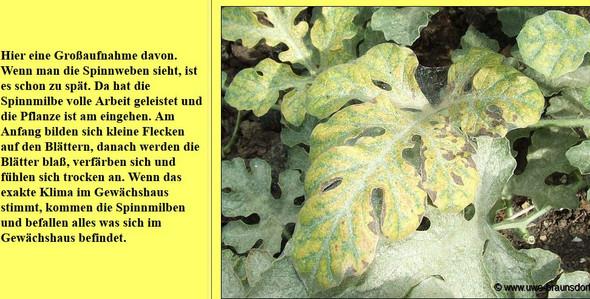 - (Gesundheit und Medizin, Garten, melone)