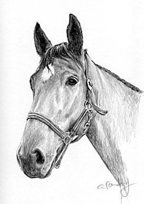 Pferd - (zeichnen, malen, Zeichentrick)