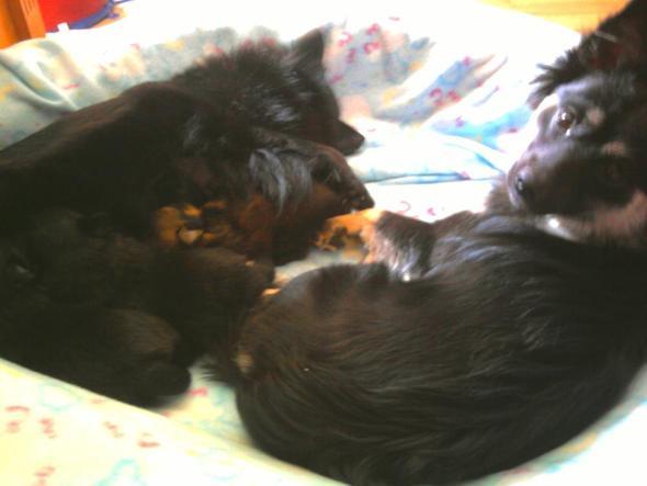 Unsere kleine Hundefamilie - (Haustiere, Spass)