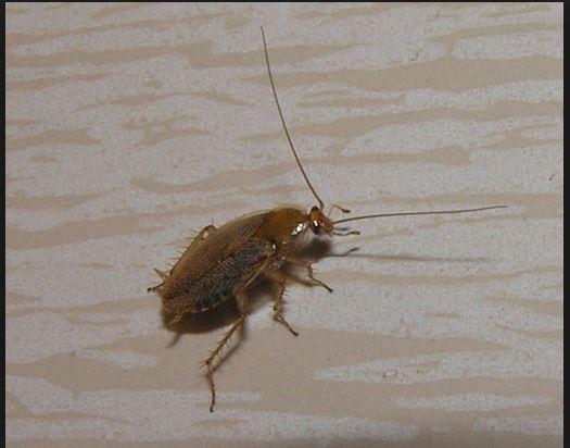 - (Tiere, Haushalt, Insekten)