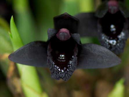 warum blühen meine orchideen nicht mehr blüten